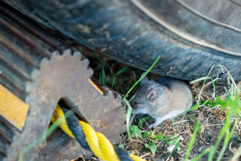 keep mice out of RV