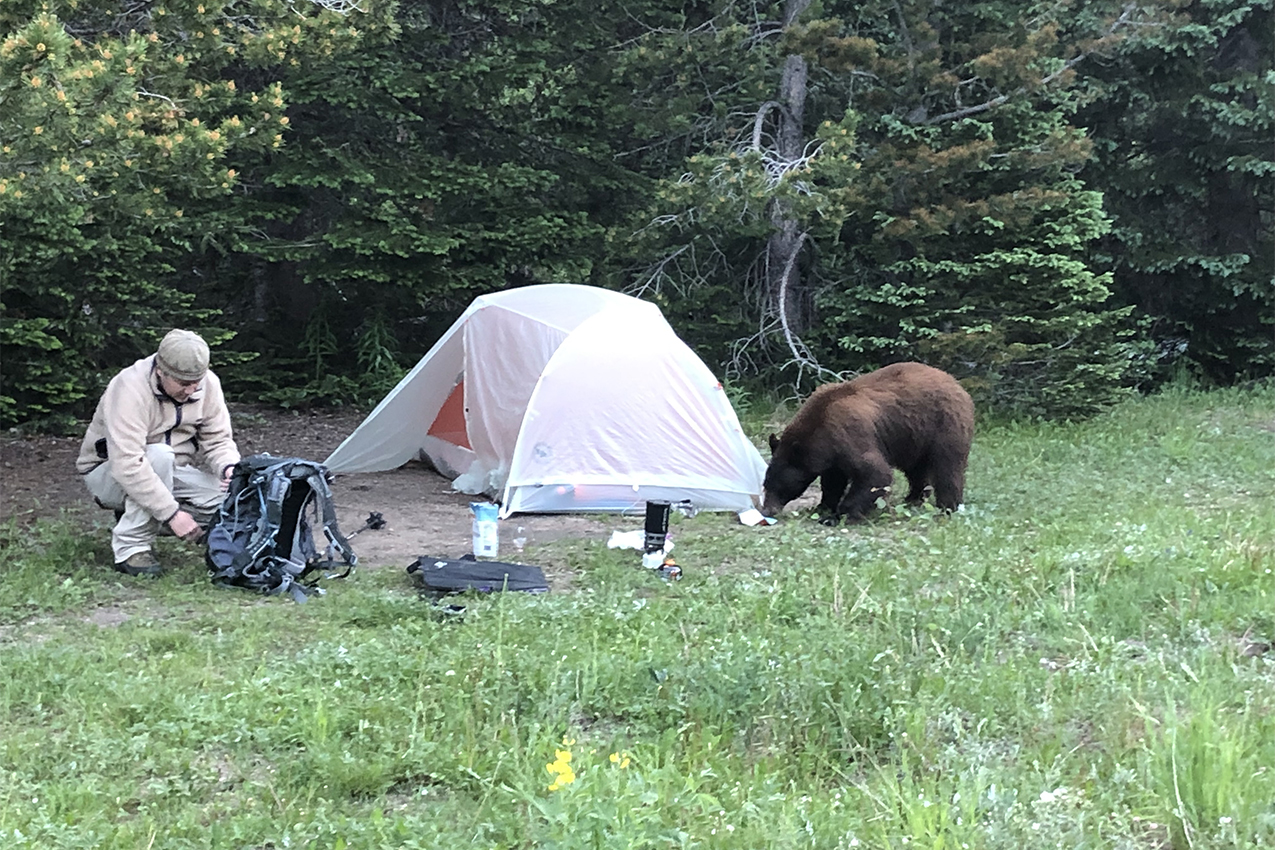 Bear sniffing a tent with a camper next to it.