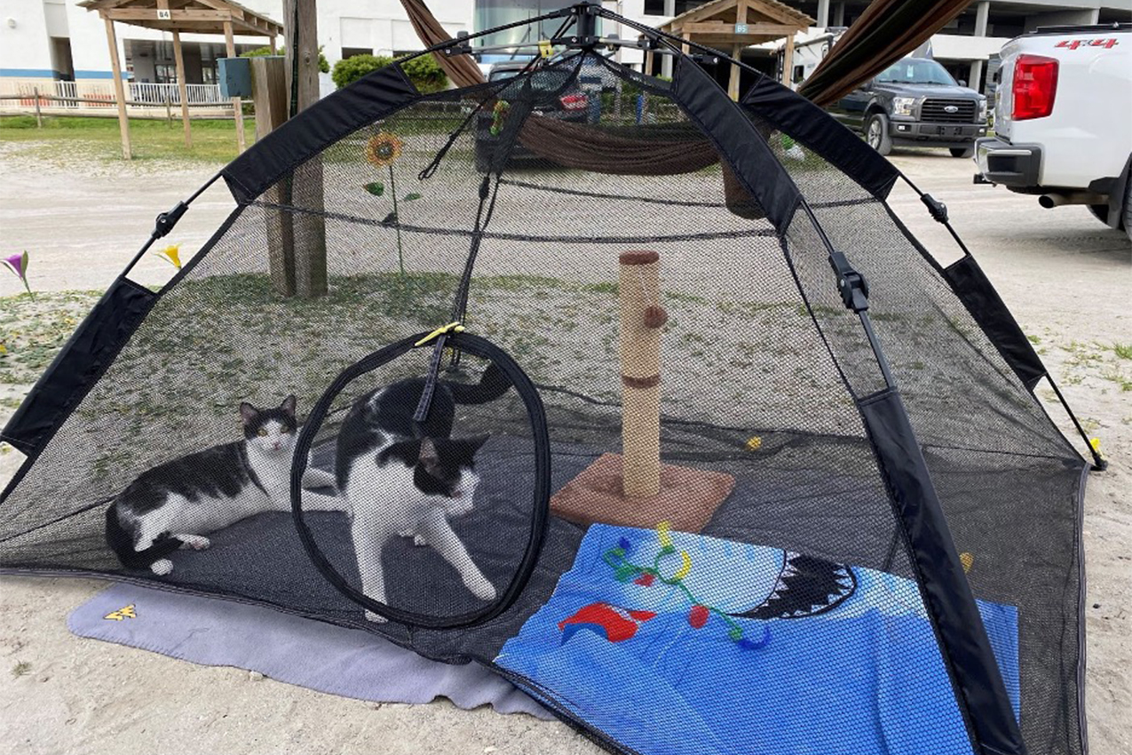 Two cats playing in a tent.