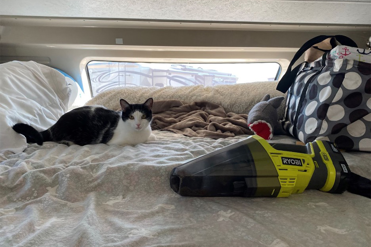 Cat on a bed with a vacuum cleaner.