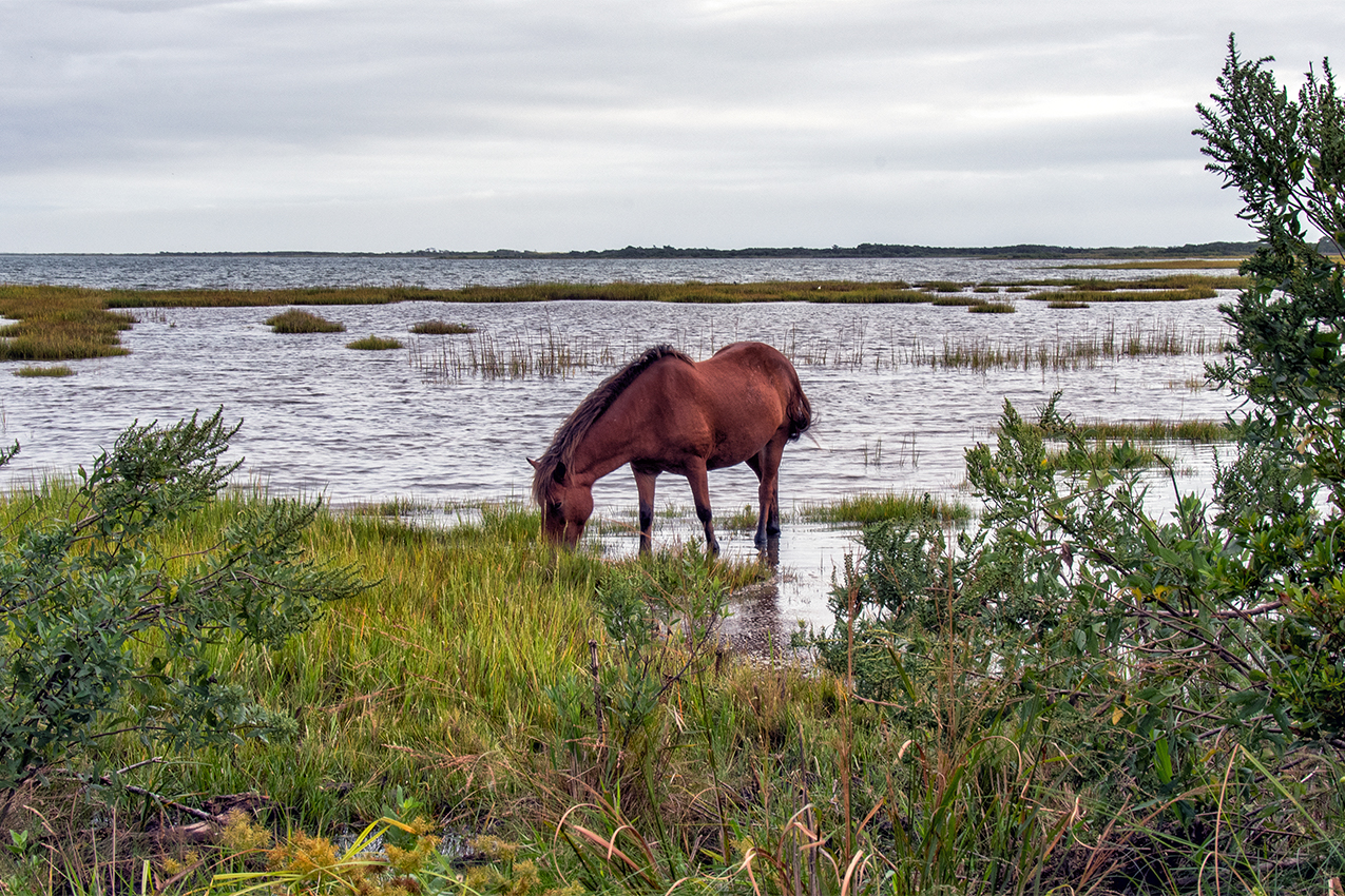 Horse standing by a beach.