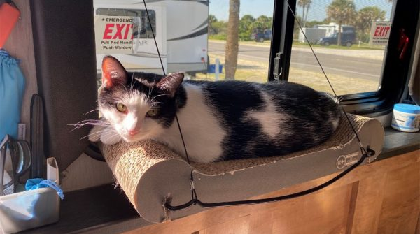 Cat laying on a window perch inside an RV.