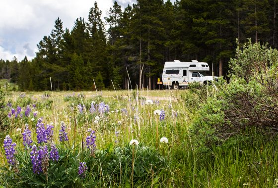 RV parked in a field of wildflowers.